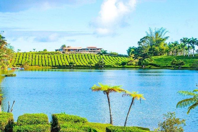 Mauritius Tea Route - Full Day