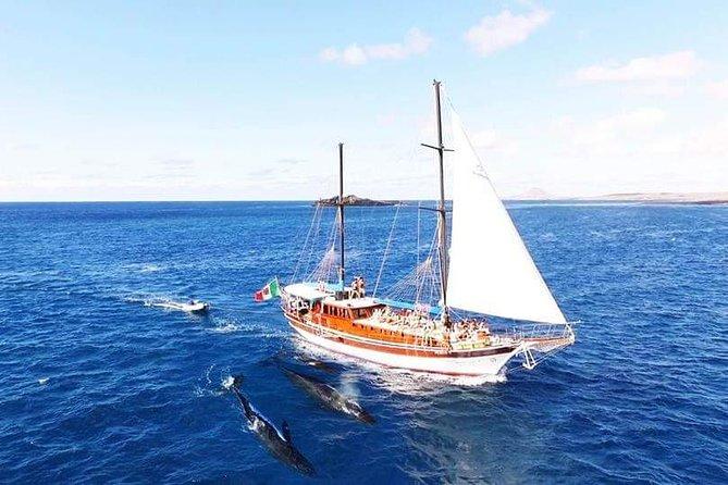 Observation des baleines en grande pompes au cap de Chélidonia