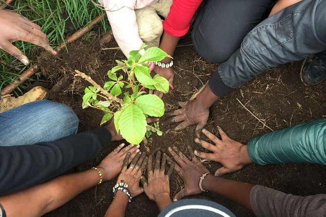 Tree planting in Limuru, Kenya