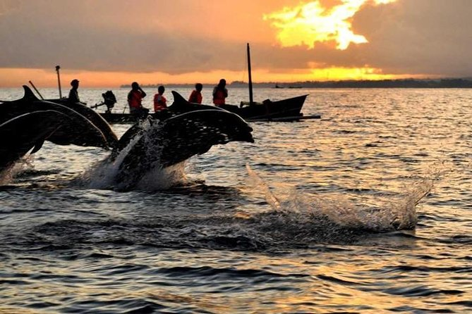 Bali Dolphin Tour Package Combination With Bedugul Trip