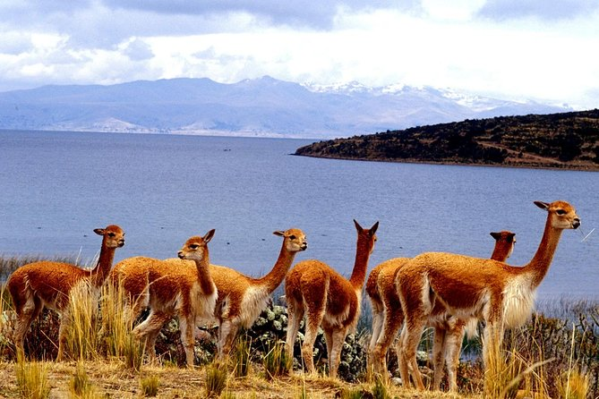 Full Day Tour Cusco to Puno with Sillustani photo 11