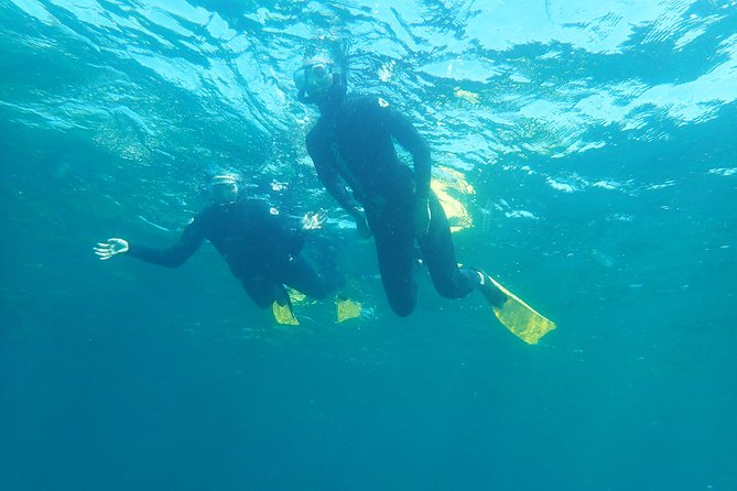 Guided Snorkel Experience, Beginners