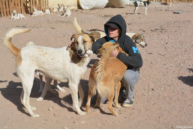 Aqaba Dog Shelter Conservation Experience