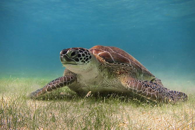 Sea Turtle Watch - Reproduction time.