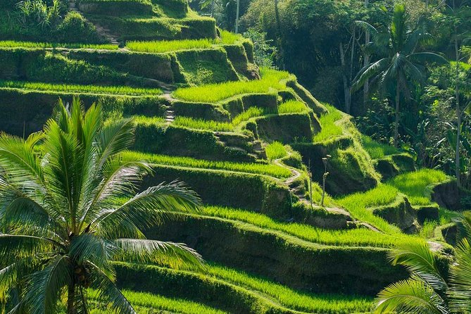 All Inclusive Ubud Tour with 15 Sitter Van photo 8