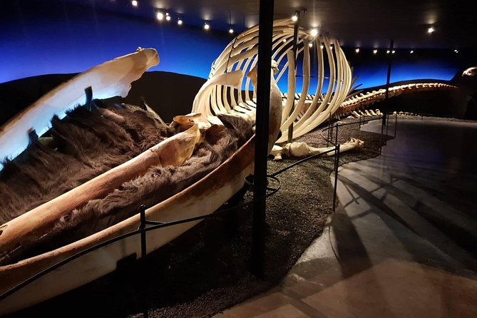 Skip the Line: Húsavík Whale Museum Admission Ticket