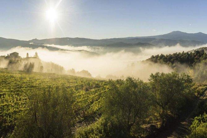 Brunello di Montalcino wine trip from Siena