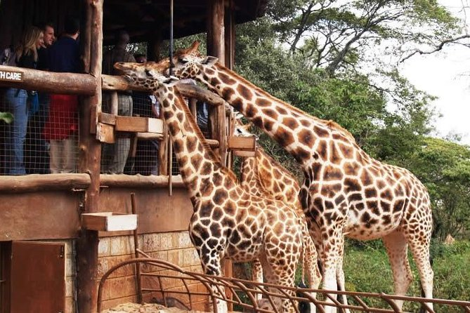 Full Day Nairobi City, Museums, Market, Food Experience and Giraffe Center Tour
