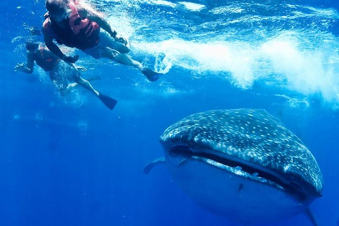Private Whale shark Ecofriendly tour from Cancun photo 1