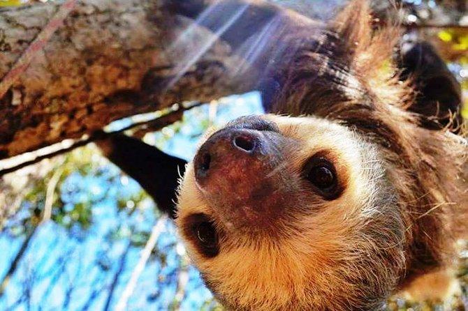 Sloth encounter tour from San Jose
