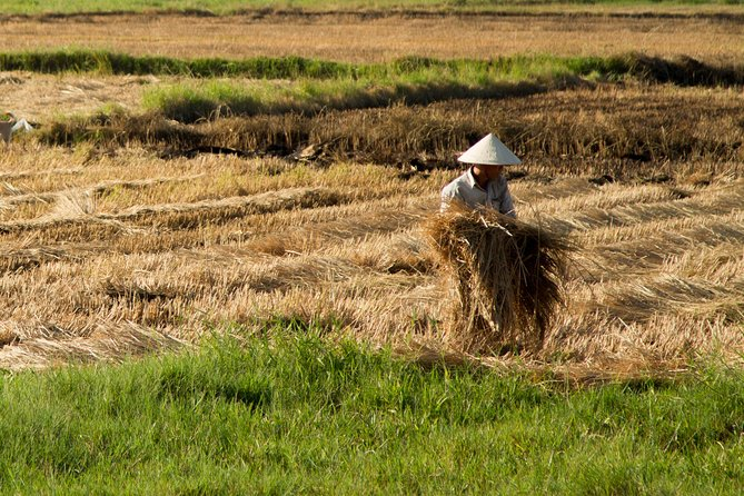 The Rice Paddy Experience from Hoi An