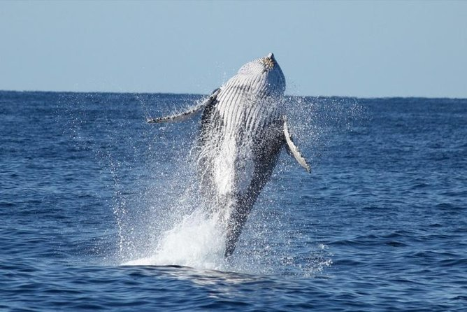 Full Day Caribbean Humpback Whale watching