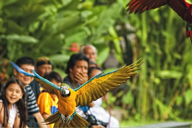 Private - Bali Bird Park with Painting and Silver Village photo 10