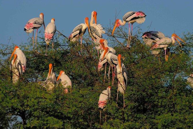 Bird watching in Bharatpur