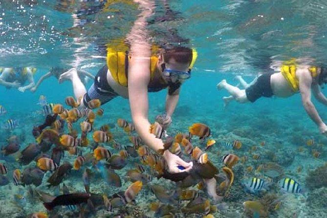 Gili island Snorkeling Half Day Trip departure from Gili Trawangan