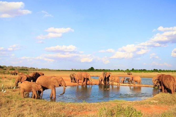 3-Day Mombasa to Tsavo East Safari