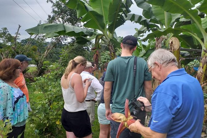 Zipline Canopy Tour & Banana Plantation. Shore Excursion from Puerto Limon photo 7