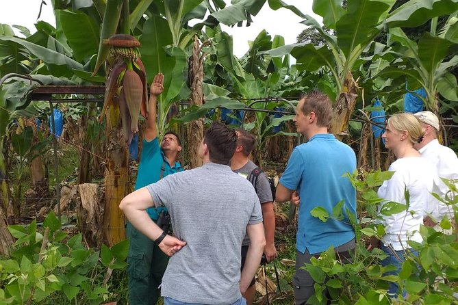 Zipline and Banana Plantation Tour from Limon photo 12