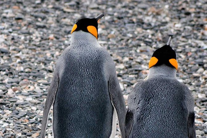Walking amoung penguins - Martillo Island Penguin Rookery photo 1