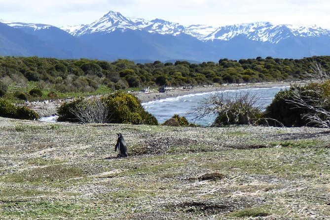 Walking amoung penguins - Martillo Island Penguin Rookery photo 2