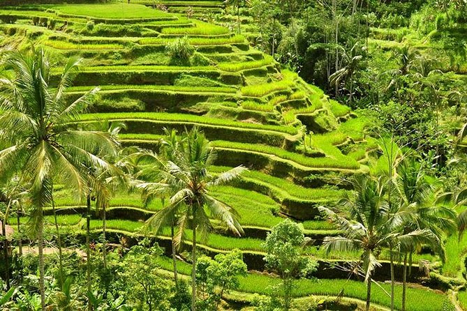 Best Ubud Tour