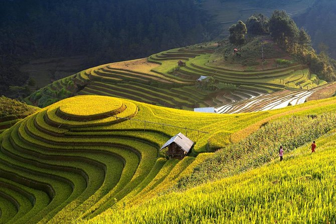 3 Day Private Tour Mu Cang Chai from Hanoi: Terraced fields; Trekking; Home-stay