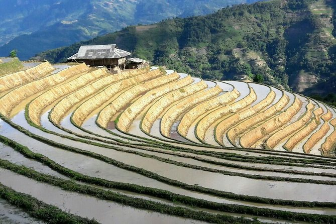 Private tour Mu Cang Chai rice terraces with trekking and homestay 3days photo 6