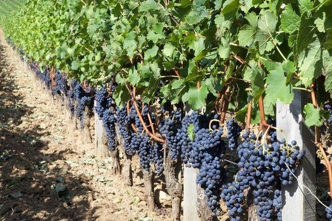 Tour privado de 2 días por los vinos de Burdeos: Médoc, Pomerol y St. Émilon