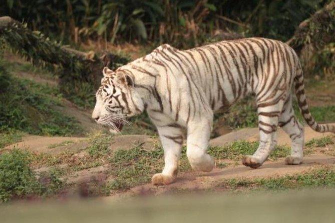 Sao Paulo Zoo and Zoo Safari Admission Tickets