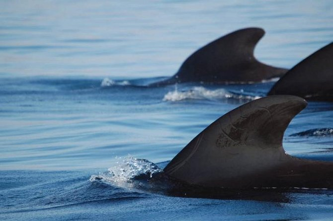 Private Dolphin Watching Sailing Tour in Tenerife