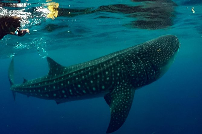 7 Day- Whale Shark Ecofriendly Tour in Cancun photo 7