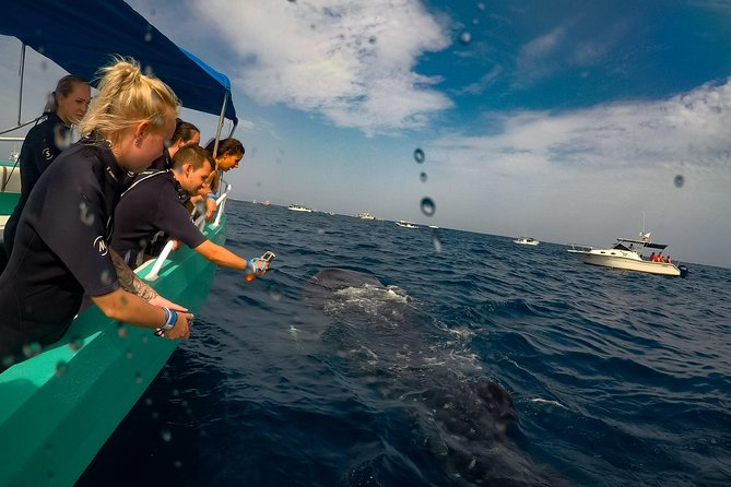 7 Day- Whale Shark Ecofriendly Tour in Cancun photo 4