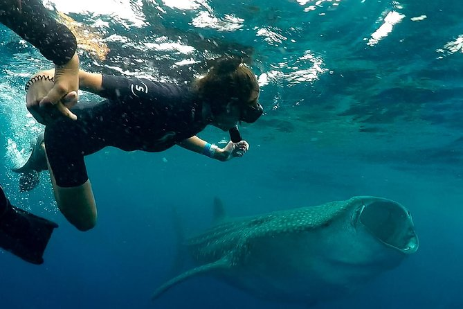 7 Day- Whale Shark Ecofriendly Tour in Cancun photo 2