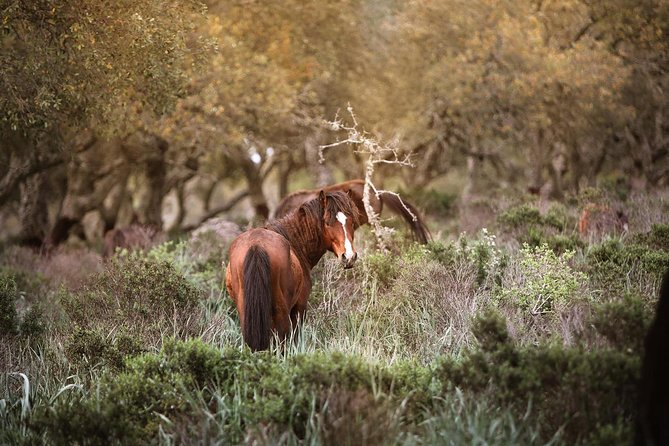 The wilde horses of the Giara and the nuraghe of Barumini photo 10