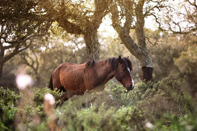 The wilde horses of the Giara and the nuraghe of Barumini photo 3