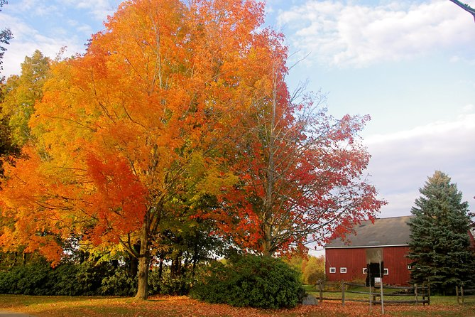 Autumn in New England: Fall Foliage Sightseeing Day-Trip with Lunch from Boston photo 9