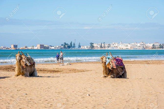 Full day trip to Essaouira Mogador and Atlantic coast from Marrakech