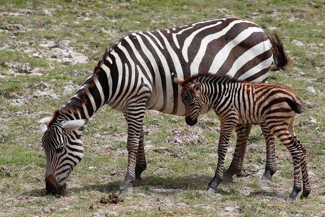3 Days Tsavo East & Amboseli (2 Nights)