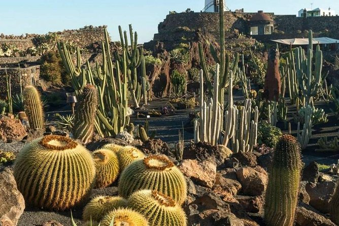 Ticket to Jardín de Cactus | Spain - Lonely Planet