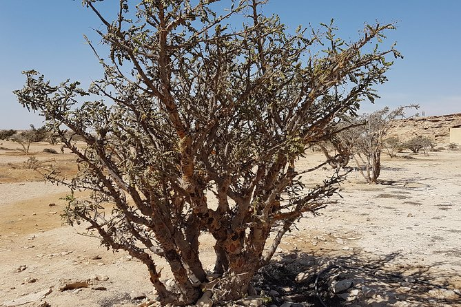 Tour of UNESCO World Heritage sites - Land of Frankincense - Salalah Dhofar Oman