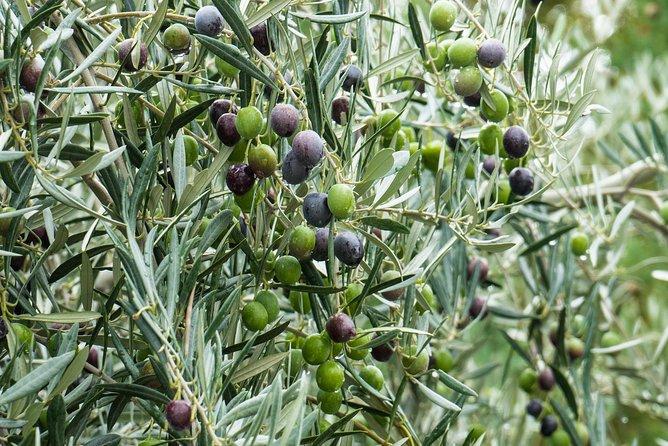 Monterosa Olive Oil Tour - Algarve Treasures