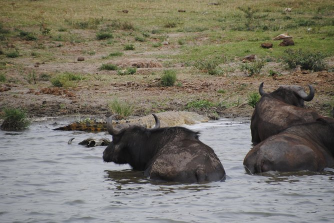 5 days wildlife uganda safari