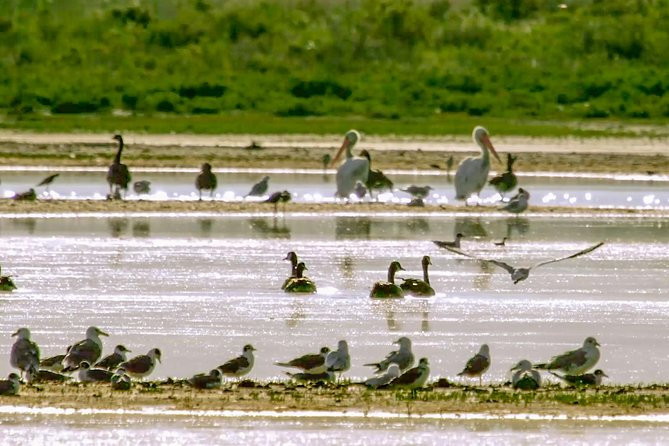 One of the largest migratory bird wetlands in the West