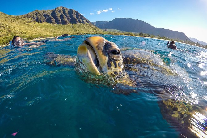 Three Hour Snorkel Adventure with Scooter in Hawaii