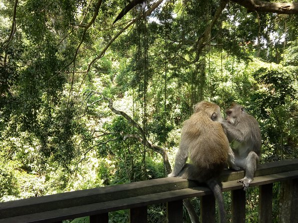 Ubud Private Tour: Waterfall, Monkey Forest and More