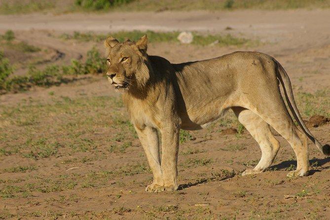 Chobe National Park Full Day Safari (Botswana)