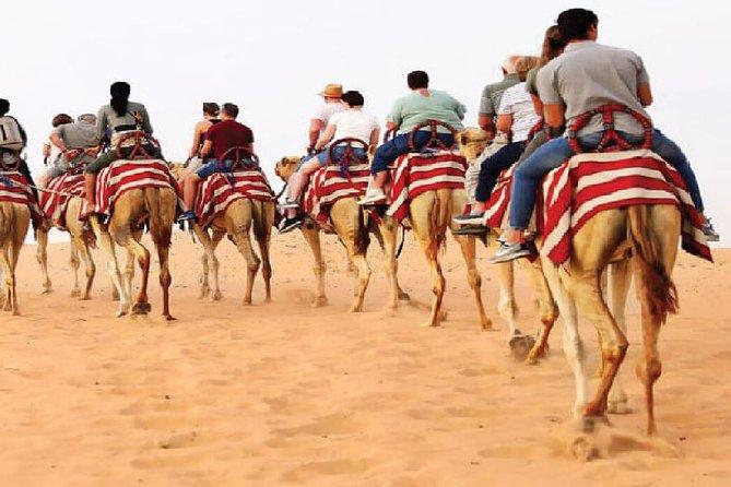 Morning Camel Trekking Safari Dubai ( with refreshment )