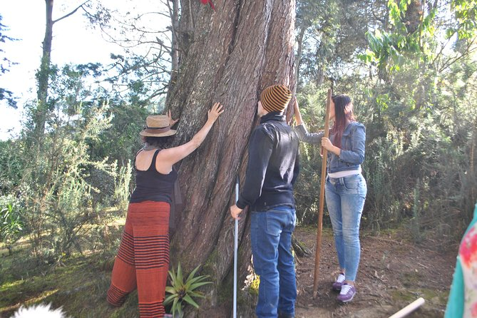 Eco tour to the sacred forest to feel the ancestral power of the earth