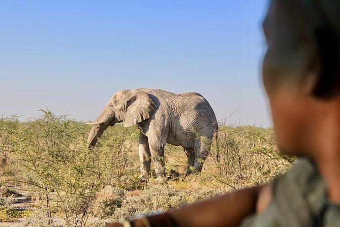 Enjoy wildlife sightings in Etosha National Park