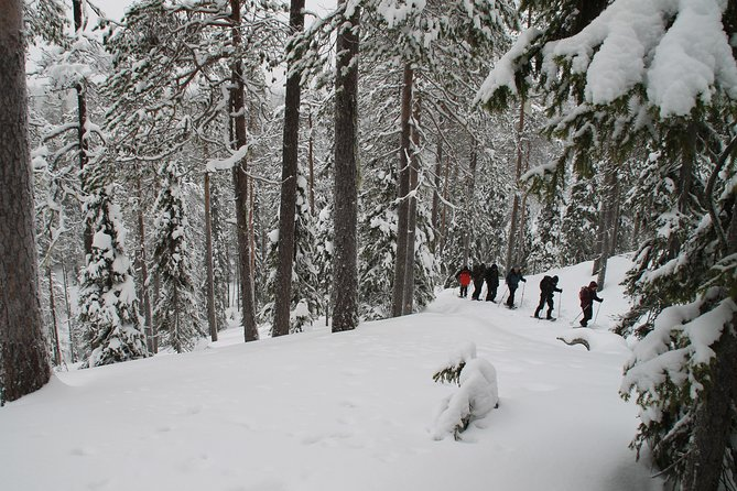 7-Day Small-Group Winter Activity Tour in the Wilderness of Northeast Finland